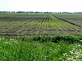 A view on agriculture fields in the spring of 2012. Midden-Drenthe - The Netherlands.jpg
