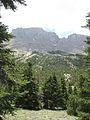 Abies cilicica, Aladağlar Mountains 1.jpg