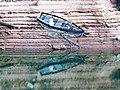 Accident - panoramio (1).jpg