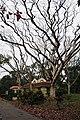 Acharya Jagadish Chandra Bose Indian Botanic Garden - Howrah 2011-02-20 1620.JPG