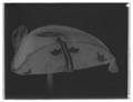 Adolf Fredriks kröningshatt buren vid kröningen den 26 november 1751 - Livrustkammaren - 28045-negative.tif