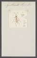 Agrothereutes - Print - Iconographia Zoologica - Special Collections University of Amsterdam - UBAINV0274 046 05 0042.tif
