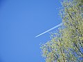 Airplane contrails and green tree 20180511.jpg