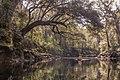 Alapaha River Rise - panoramio.jpg