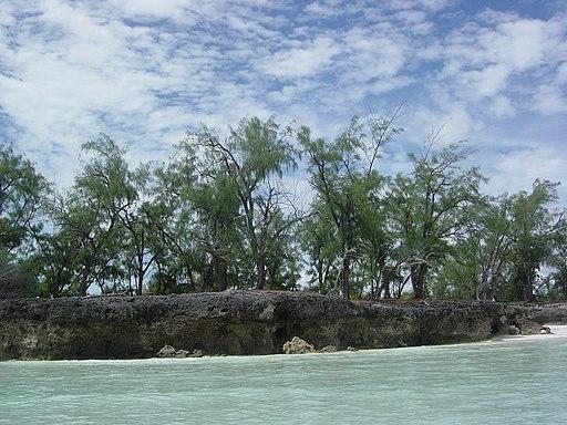 Aldabra Atoll-108985