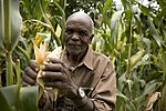 Alfred Masinde is proud to have tested a new variety of maize (8330551950).jpg