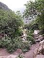 Algerie Blida Chiffa Source de Singes (37).jpg