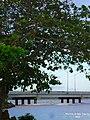 Almendro sobre el Rio Abacoa, Arecibo, Puerto Rico - panoramio.jpg
