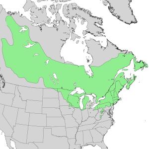 Alnus incana - Image: Alnus incana ssp rugosa range map 1