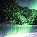 Amazing forest.jpg