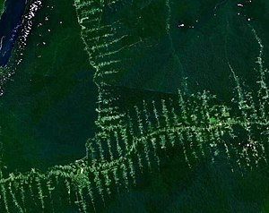 Habitat destruction - Deforestation and roads in Amazonia, the Amazon Rainforest.