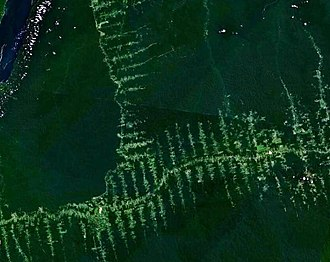 "Urban ecology - Deforestation in the Amazon rainforest. The ""fishbone pattern"" is a result of the roads in the forest created by loggers."