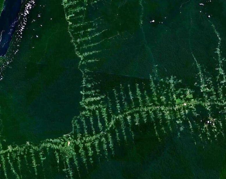 Amazonie deforestation.jpg