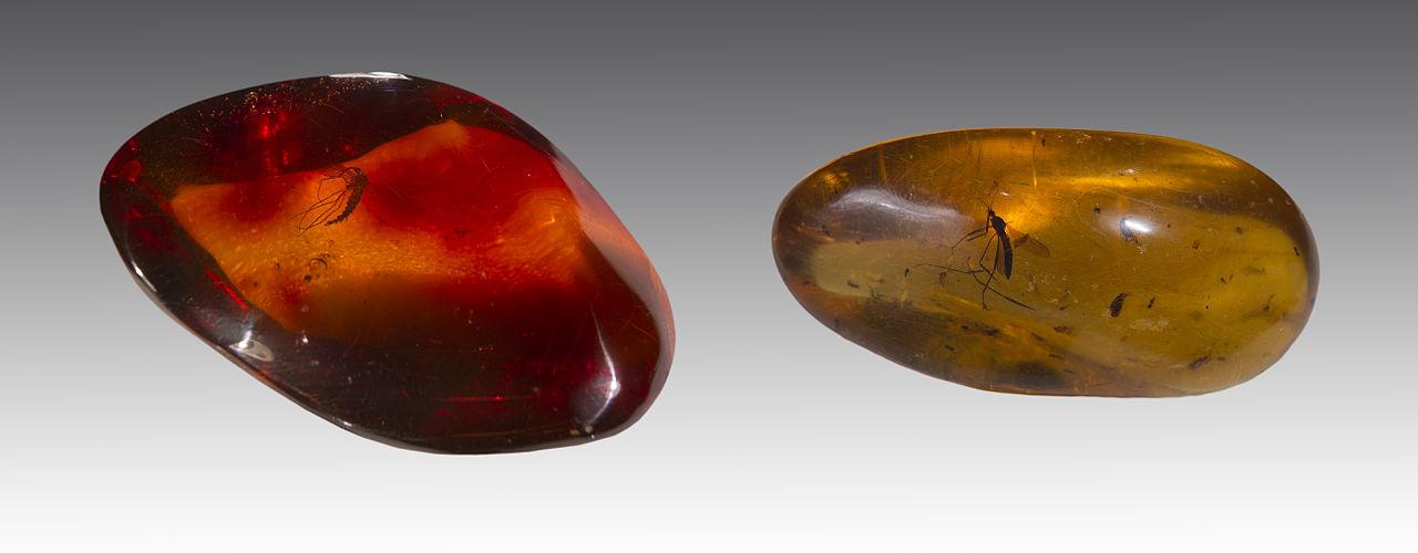 Minéraux et pierres précieuses - Page 5 1280px-Ambre_Moustique