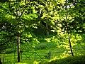 Amenity plantation at Malham Tarn House - geograph.org.uk - 188147.jpg