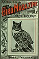 American ornithology, for home and school (1905) (14755305652).jpg