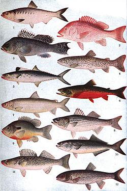 Peixes de várias espécies