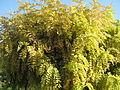 Amin al-Islami Park - Trees and Flowers - Nishapur 004.JPG