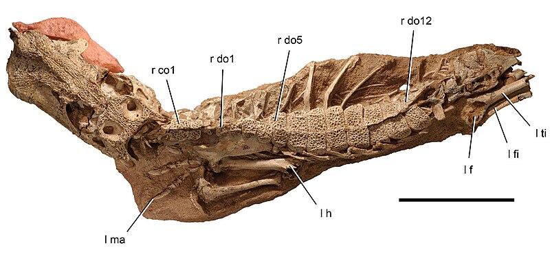 Urzeit-Quiz 800px-Anatosuchus_minor