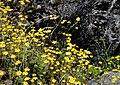 Angahuan, flora 04.jpg