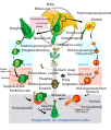 Angiosperm life cycle diagram hu.svg