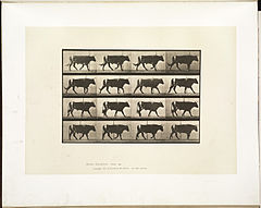 Animal locomotion. Plate 669 (Boston Public Library).jpg