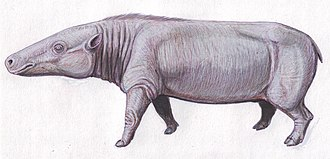 Hippopotamus - Anthracotherium magnum from the Oligocene of Europe