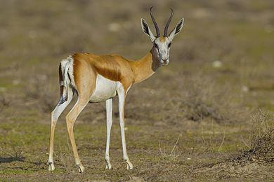 Image Result For Buck Deer Coloring