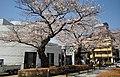 Aoyama Cemetery1a.jpg
