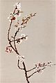 Apple Blossoms, Fidelia Bridges.jpg