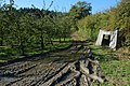 Apple orchard in the Suckley Hills - geograph.org.uk - 589547.jpg