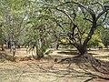 Arboretum Nairobi.jpg