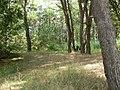 Aroma Eucaliptus - panoramio.jpg