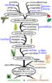 Arvore filogenética das plantas.png