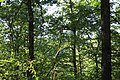 Arzakan-Meghradzor Sanctuary 020.jpg