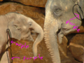 Asian Elephant and Baby CA highlighted.PNG