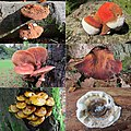 At the park of castle Rozendaal very much mushrooms can be found - panoramio.jpg