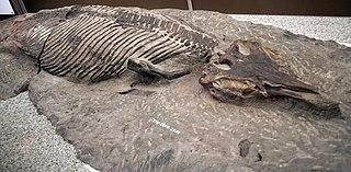 <i>Athabascasaurus</i> genus of reptiles (fossil)