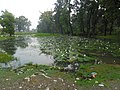 Attarya , lotus - panoramio.jpg