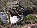 Auchinlillylinn Spout and Gorge, River Carron, Near Denny - geograph.org.uk - 373099.jpg