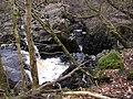 Auchinlillylinn Spout and Gorge, River Carron, Near Denny - geograph.org.uk - 373099.jpg