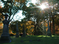 Autumn, Morning Light on Graves, Riverside Cemetery Waterbury.png