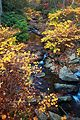 Autumn-creek-foliage - West Virginia - ForestWander.jpg