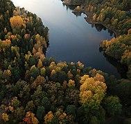 Autumn forest Duvnäs.jpg