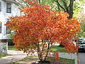 Autumn in Rogers Park, Chicago, IL.jpg