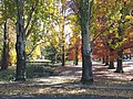 Autumn in the Park - panoramio.jpg