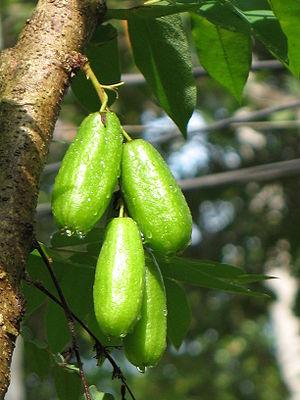 Averrhoa bilimbi - Image: Averrhoa bilimbi fruit by Sugeesh
