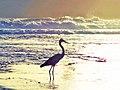 BIRD ENJOYING SUNSET.jpg