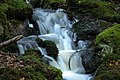 Bach im Nationalpark Bayerischer Wald.jpg