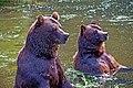 Badende Braunbären.jpg